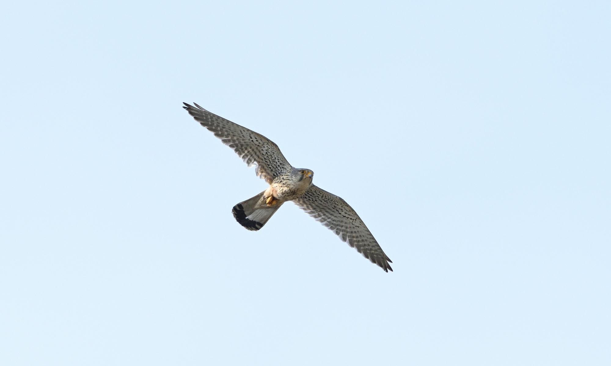 ロクヨンで野鳥撮影